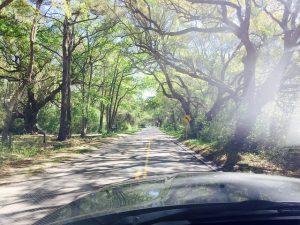 Road leading to farm in South Carolina