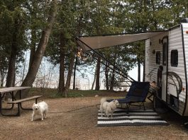 2 dogs at a campground's campsite